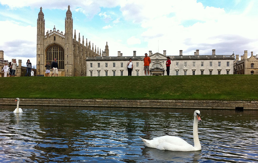 Swans on the River Cam, with Kings College Chapel in the background